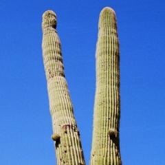 VS - Arizona (46)