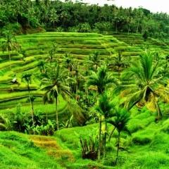 Bali (49)