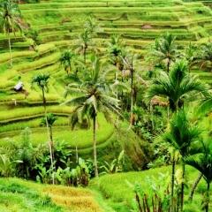 Bali (51)