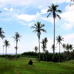 Bali (54)