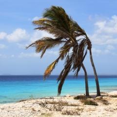 Bonaire (21)