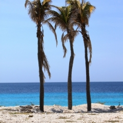 Bonaire (23)