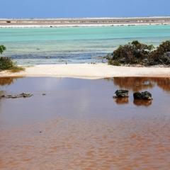 Bonaire (45)