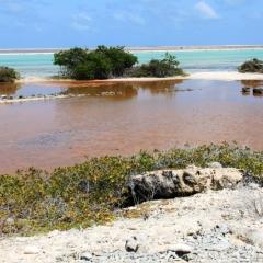 Bonaire (46)