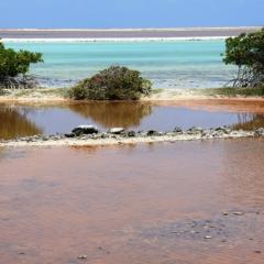 Bonaire (47)