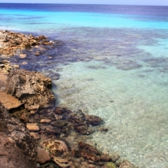 Bonaire (53)