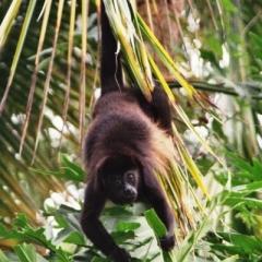 Costa Rica (17)