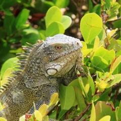 Curacao (36)