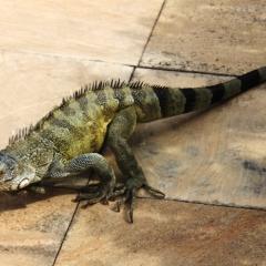 Curacao (39)