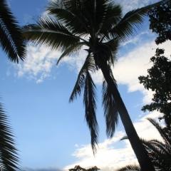 Dominicaanse Republiek (13)