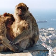 Spain - Gibraltar (4)
