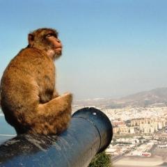 Spain - Gibraltar (6)