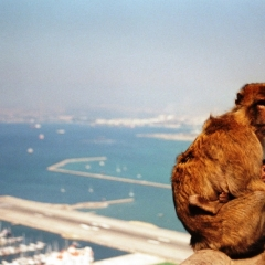 Spain - Gibraltar (9)