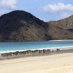 Lombok (45)