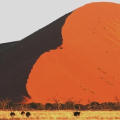 Namibie (26)