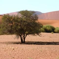 Namibie (31)