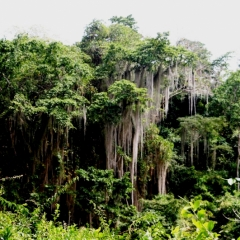 Noord Colombia (39)