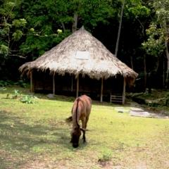 Noord Colombia (44)