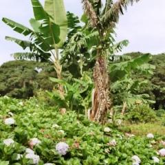 Panama (17)