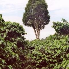 Panama (19)