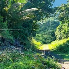 Saint-Kitts-Nevis-18