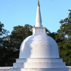 Sri Lanka (11)