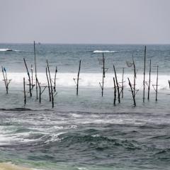 Sri Lanka (30)