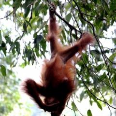 Sumatra (10)