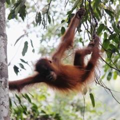Sumatra (11)