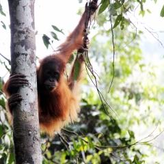 Sumatra (13)