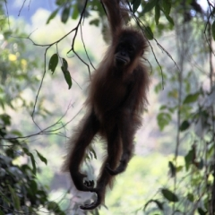 Sumatra (14)