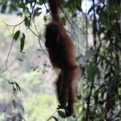 Sumatra (15)
