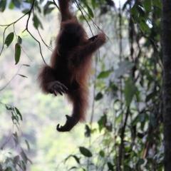 Sumatra (16)