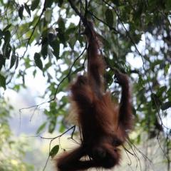 Sumatra (17)