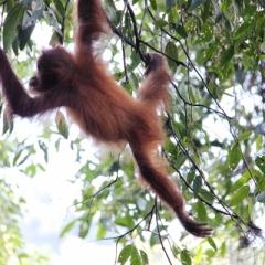 Sumatra (18)