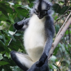 Sumatra (20)