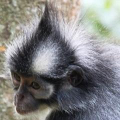 Sumatra (21)