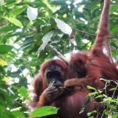Sumatra (25)