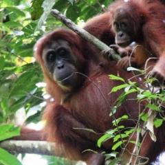 Sumatra (26)