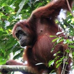Sumatra (27)