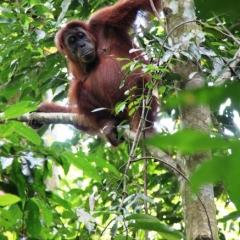 Sumatra (28)