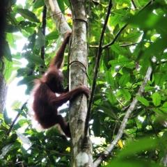 Sumatra (30)