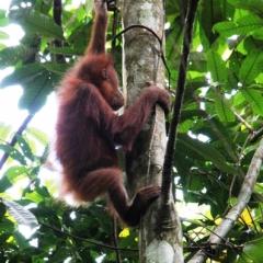 Sumatra (31)