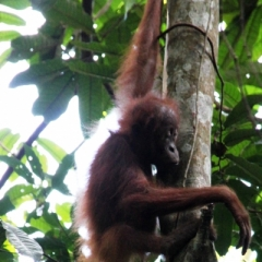 Sumatra (32)