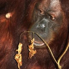 Sumatra (36)