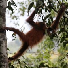 Sumatra (4)