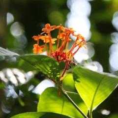 Sumatra (47)