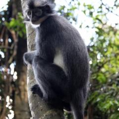 Sumatra (6)