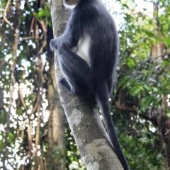 Sumatra (7)
