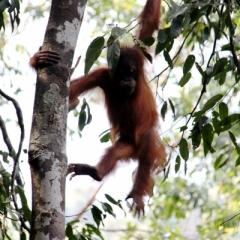 Sumatra (9)